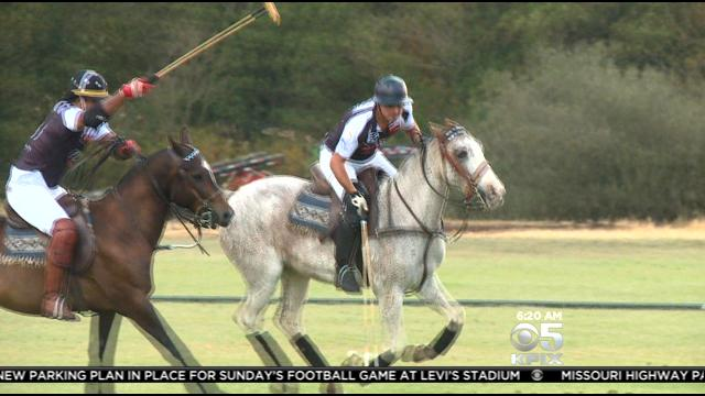 <b>Where's Roberta</b>? In Petaluma With Polo SF « CBS San Francisco