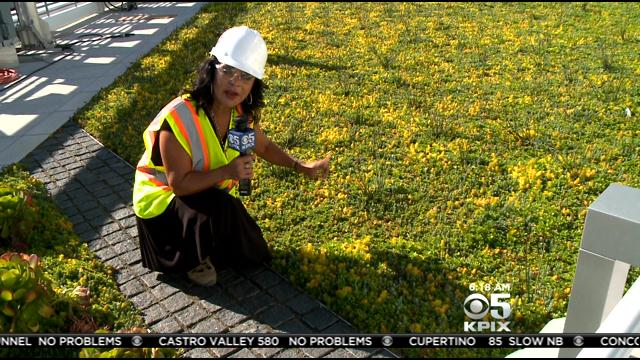 <b>Where's Roberta</b>? Touring The Living Roof Of Levi's Stadium « CBS <b>...</b>
